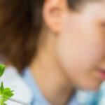 Pflanzenforschung am INP